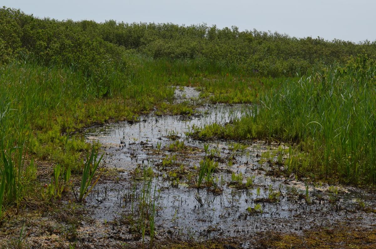 CallantsoogZwanenwater089