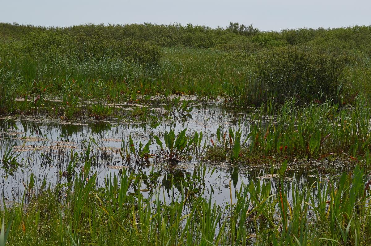 CallantsoogZwanenwater093