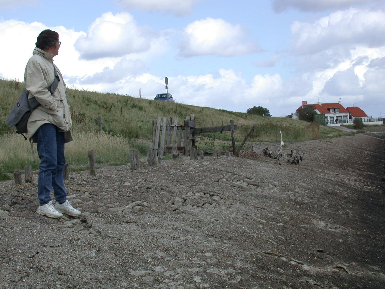 Zeelandweeend-2001-094